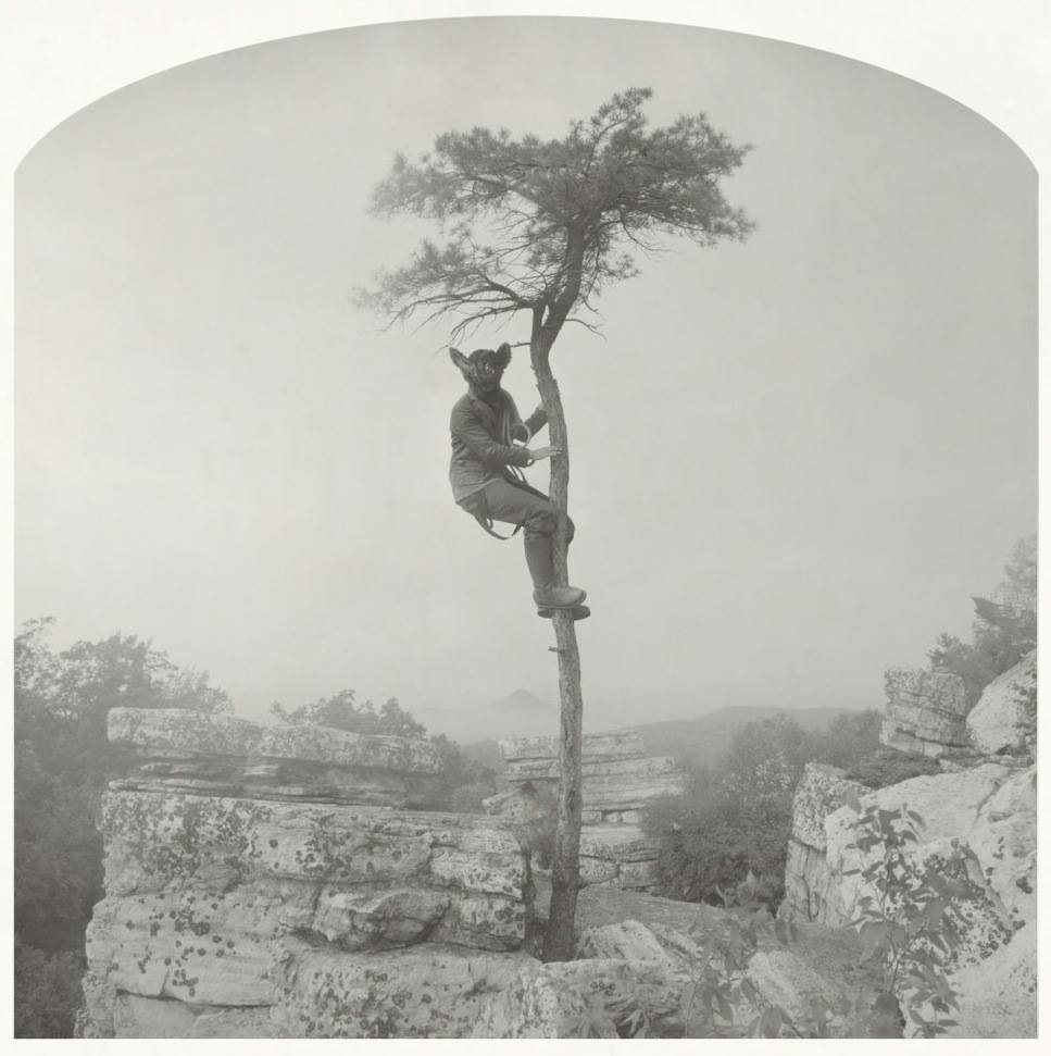 Nicholas Kahn & Richard Selesnick, Bat in a Tree, 2012-2013